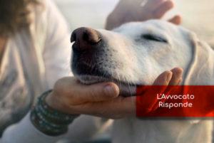 Custodia del Cane e Responsabilità del Proprietario